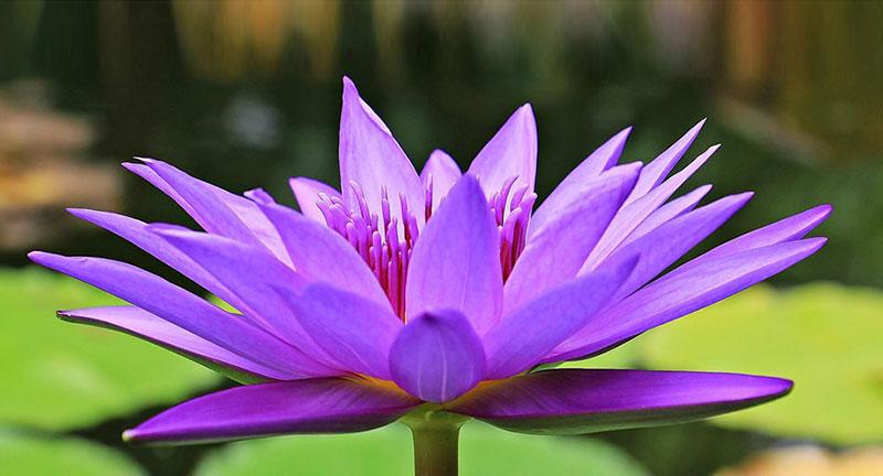 GIRONA - Xerrada Gratuïta: Mindfulness; salut i creativitat